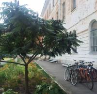 Велопарковка перед Архитектурным корпусом ПолНТУ